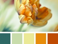 The Color