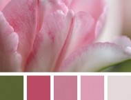ColorPalettes